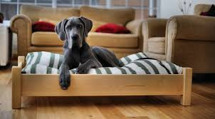 Best Dog Bed For Chewers Who Really Wants To Sleep On The Floor This Raised Dog Bed Would