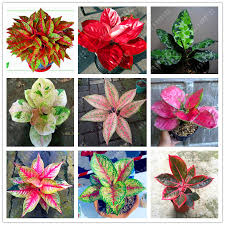compare prices on small houseplants online shopping buy low price