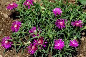 Rock Garden Plant Rock Garden Plant Selection Guide Sun Plants Zone 5