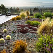 california native plant gardens 12 great drought tolerant plants sunset