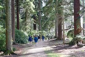 rhinefield ornamental drive arboretum trees trail
