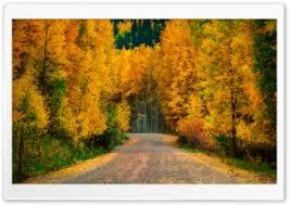 autumn tree 4k hd desktop wallpaper for 4k ultra hd tv u2022 wide