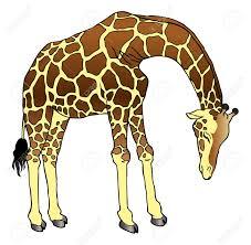 a drawing of a sad drooping giraffe royalty free cliparts vectors