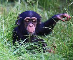 ks1 science carnivore herbivore and omnivore animals