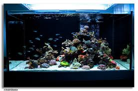 Aquascape Reef Saltwater Reef Aquariums This Is A Stunning Reef Tank That Truly