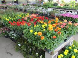 Flower Shops In Springfield Missouri - 100 flower shops in nixa mo combination bookstore and
