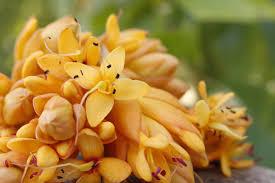 florida the magic of the naples botanical garden lotuswei