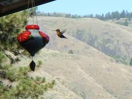 sweet home theater hummingbird hill resort spacious mountain vrbo