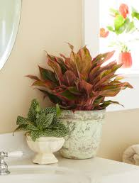 Beautiful House Plants by Costa Farms Shares Tips On Adding Houseplants For Winter Beauty