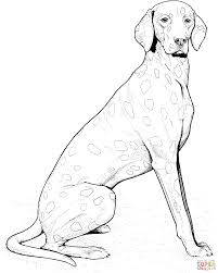 weimaraner coloring page free printable coloring pages