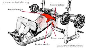 What Do Bench Presses Work Out How To Do An Incline Bench Press Barbell Exercise Index