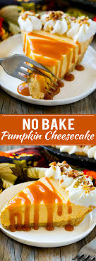 no bake pumpkin cheesecake dinner at the zoo