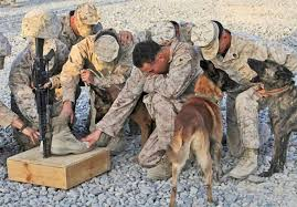 belgian malinois k9 attack 10 things you may not know about military dogs barkpost