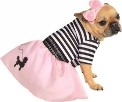 20 halloween costumes for dogs u0026 cats halloween pets