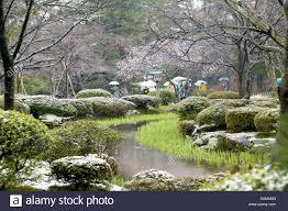 spring snowfall at kenrokuen gardens kanazawa japan widely