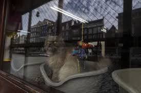 Boat A Home Photos Stray Cats Find A Home On An Amsterdam Houseboat World