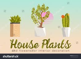 house plants flowers interior decoration flat stock vector