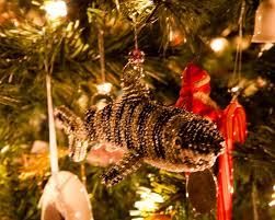 my christmas tree ruckersville va photographer terry beigie