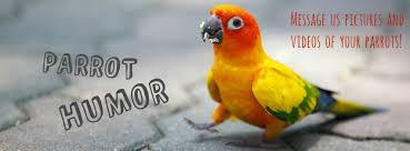 Parrot Meme - parrot humor home facebook