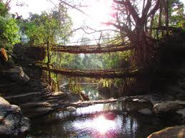 What Is Root Bridge Of Living Root Bridges And Rainbows In Waterfall Nongriat