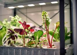 great ikea moves into indoor gardening with hydroponic kit