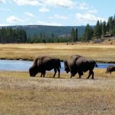 Park West Landscape by Yellowstone Park West Entrance Koa 46 Photos U0026 54 Reviews