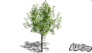 3d tree model design in sketchup free 3d 3d tree download