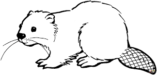 north american beaver coloring page free printable coloring pages