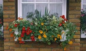 Plants For Winter Window Boxes - alan titchmarsh u0027s tips on growing plants on balconies garden