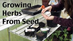 starting herbs from seeds youtube