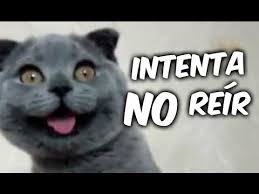 imagenes chistosas youtube animales chistosos y graciosos 02 vídeos de risa de animales