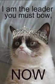 Frown Cat Meme - grumpy cat memes for kids google search mohrs stuff