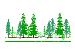 index of lessons less biomes conifers conif for tree border gifs