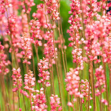 10 Best Perennials And Flowers by 10 Perennials For The Northeast Howstuffworks