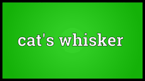 cat u0027s whisker meaning youtube