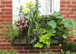 plant a window box victory garden joel the gardener