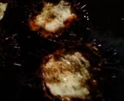 comment cuisiner des oursins oursins à la crême recette de oursins à la crême marmiton