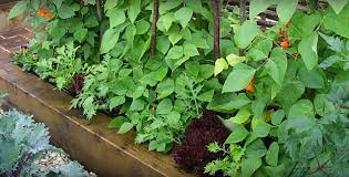 5 practical vegetable garden layout tips and ideas