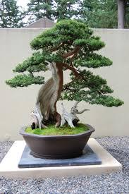 85 best gardening bonsai vivarium images on pinterest
