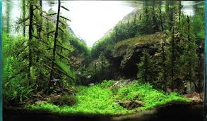 Japanese Aquascape by Planted Tank Cave In The Valley By Omer Nadir Kocaoglu Aquascape