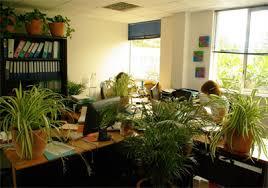 plante bureau plante verte pour bureau florideeo