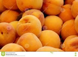 Clingstone Prunus Persica Yellow Cling Peach Stock Photo Image 77747689