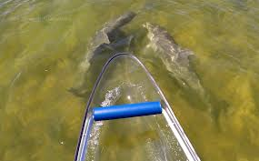 clear kayak see through adventure clear kayak rentals tours sales based in
