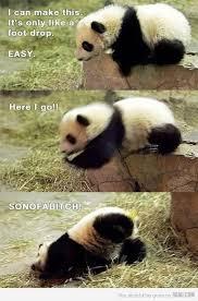 Panda Mascara Meme - luxury 26 panda mascara meme wallpaper site wallpaper site
