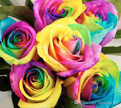 color roses shop seeds online perennials beautiful flowering roses seeds