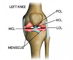 3d Knee Anatomy Proe Generated 3d Model Of The Upper Knee Femur Side Figure 2