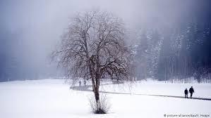 autumn when trees prepare for winter all media content dw