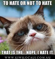 Funny Memes Clean - funny clean grumpy cat memes clean best of the funny meme