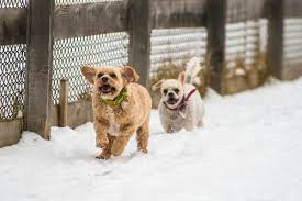 Snow At Home by Disabled And Unadoptable Animals Play In The Snow At A No Kill