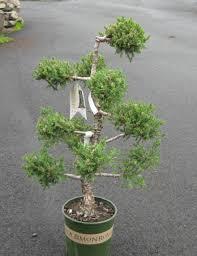 Ny Topiary - topiaries